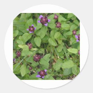 Purple Archangel Wildflower Classic Round Sticker