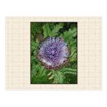 Purple Artichoke Flower. On beige check. Postcard