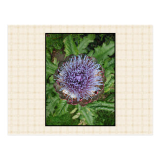 Purple Artichoke Flower. On beige check. Postcard