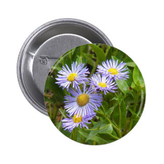 Purple Aster Pinback Buttons