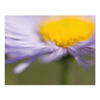 Purple Aster • Card / Invitation