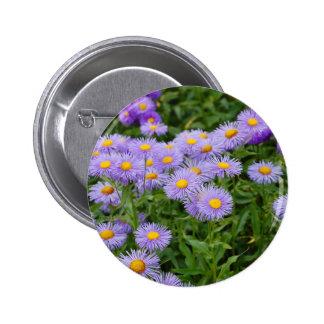Purple aster flower garden buttons