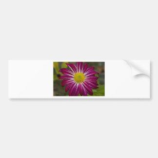 Purple Aster Flower Power Bumper Sticker