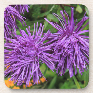 Purple Aster Flowers Beverage Coaster