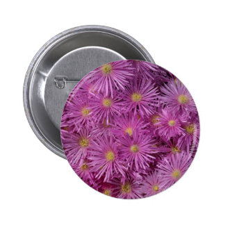 Purple Aster Flowers Button