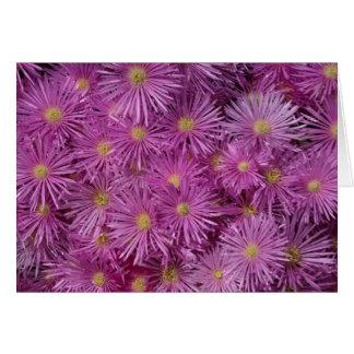 Purple Aster Flowers Card