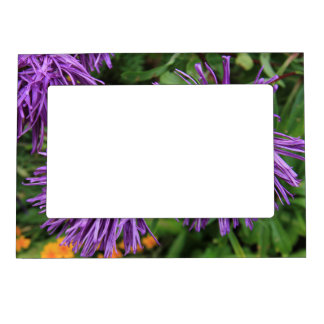 Purple Aster Flowers Magnetic Picture Frame