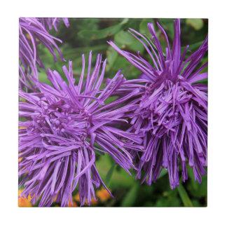 Purple Aster Flowers Tile