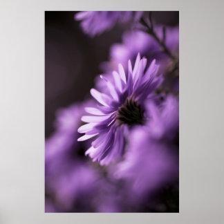 Purple Aster Print