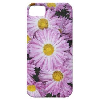 Purple aster raindrops iPhone SE/5/5s case