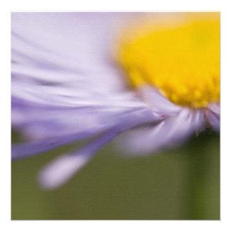 Purple Aster • Square Card / Invitation