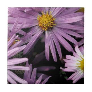 Purple Aster Ceramic Tiles