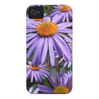 Purple Asters Blackberry Bold case