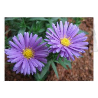 Purple Asters Card