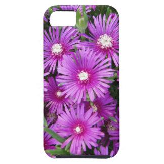 Purple Asters iPhone SE/5/5s Case