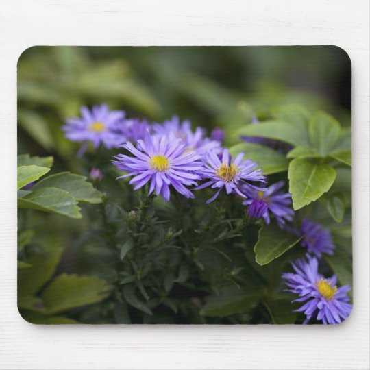 Purple Asters Mouse Pad