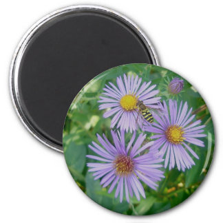 Purple Asters with Bee Fly Magnet