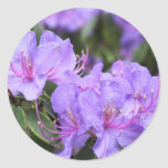 purple  azalea flowers,  杜 鹃 花 stickers