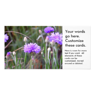 Purple bachelor buttons fun colorful garden flower card