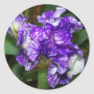 Purple Batik Iris Sticker