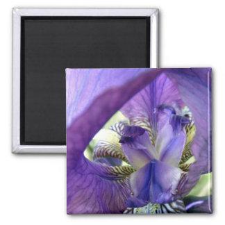 Purple Bearded Iris Flower Floral Macro 2 Inch Square Magnet