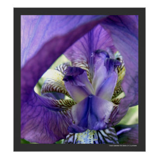 Purple Bearded Iris Flower Floral Macro Poster Pri