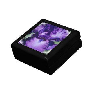 Purple Bearded Iris Gift Box