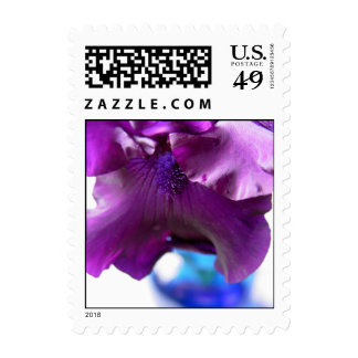 Purple Bearded Iris in a Blue Vase Postage Stamp