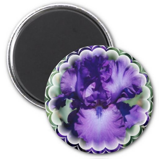 Purple Bearded Iris Magnet Refrigerator Magnets
