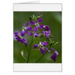 Purple Beauty Card
