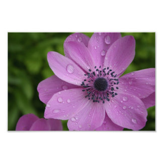 Purple beauty photo print