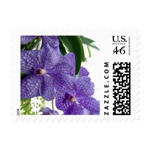 Purple Beauty Stamp