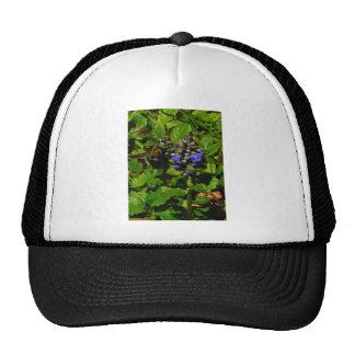 Purple Bee Balm and Bumble Bee Trucker Hat