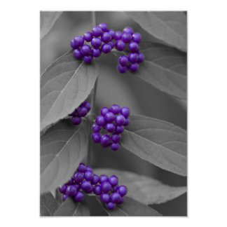 Purple Berries on Black and White Leaves Poster