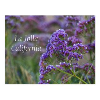 Purple blooms in La Jolla Postcard