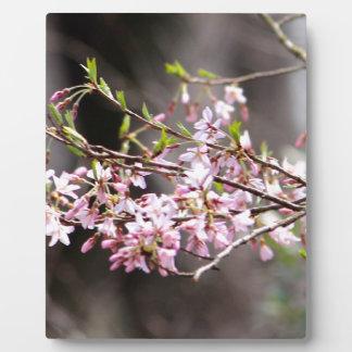 Purple blooms plaque