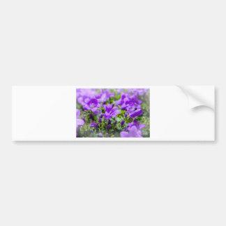 purple blossoms vines plants flora bellflower car bumper sticker