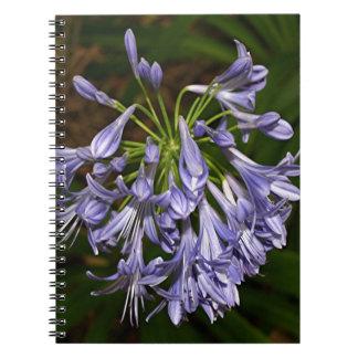 Purple blue agapanthus flower in bloom in garden spiral notebooks