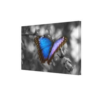 Purple Blue Butterfly Canvas Print