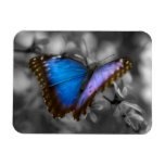 Purple Blue Butterfly Rectangle Magnets