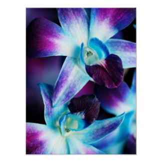 Purple & Blue Dendrobium Orchid Customized Orchids Poster