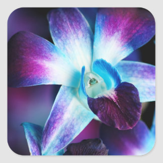 Purple & Blue Dendrobium Orchid Customized Orchids Square Sticker