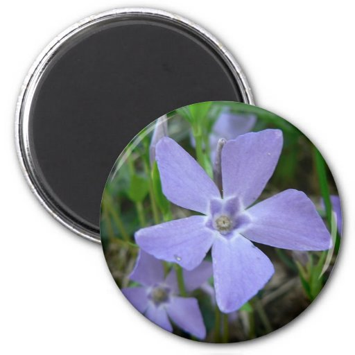 Purple Blue Flower Refrigerator Magnet