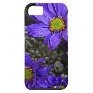 Purple Blue Green Chrysanthemums iPhone SE/5/5s Case