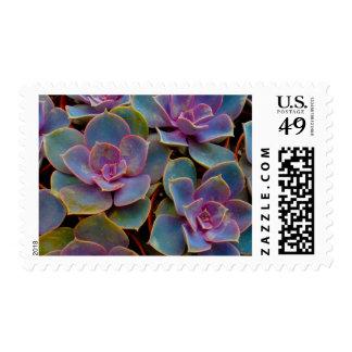 Purple Blue Green Succulent Cactus Plant Postage