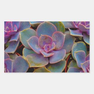 Purple Blue Green Succulent Cactus Plant Rectangular Stickers