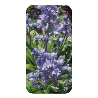 Purple Bluebells in full bloom iPhone 4 Covers