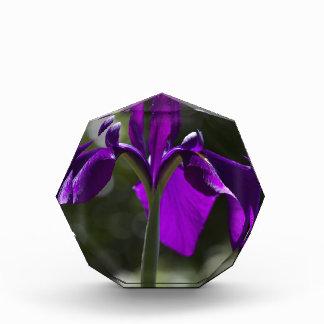 Purple Bog Iris with Bokeh Background Award