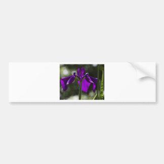Purple Bog Iris with Bokeh Background Bumper Stickers