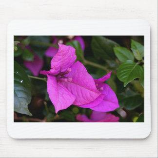 Purple Bougainvillea flower in bloom Mouse Pad